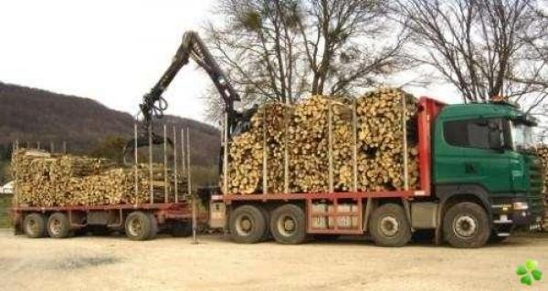 Lagage abattage d arbres pornichet la baule gu rande - Arbre fruitier comme bois de chauffage ...
